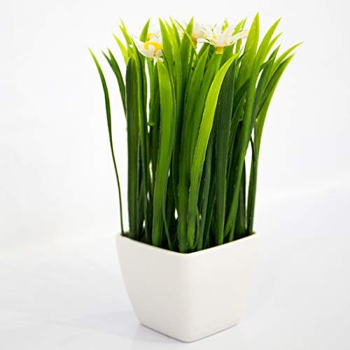 Buy Penadia Artificial Flower Pot With Flower Flower Vase For Home Decoration Flower Pot With Artificial Flowers White Flower Features Price Reviews Online In India Justdial